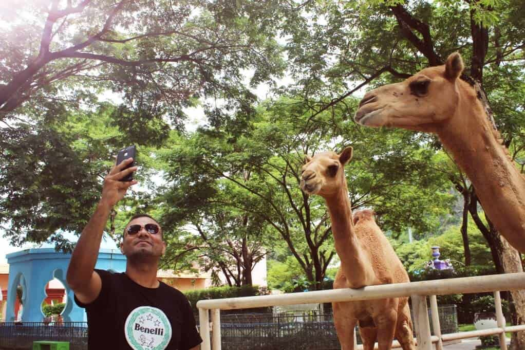 hua hin attractions - Camel Republic