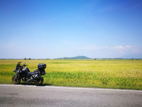 peninsular-malaysia-ride-kuala-muda-paddy-field