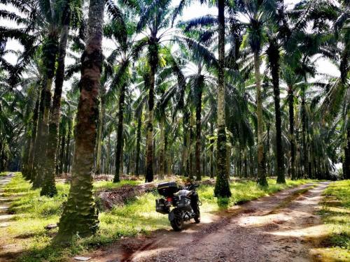 peninsular-malaysia-ride-tanjung-belanja-palm-oil-plantation